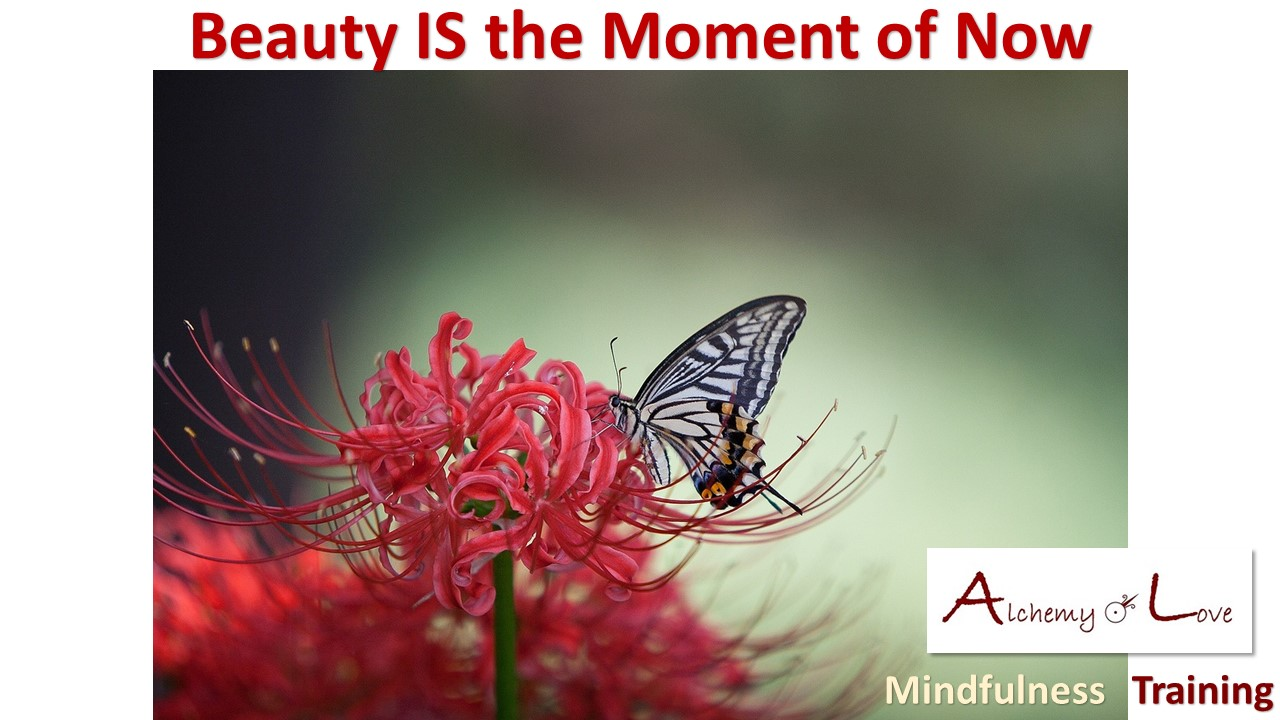 Living in the Present Moment and Beauty Alchemy of love mindfulness training by Nuit life quote