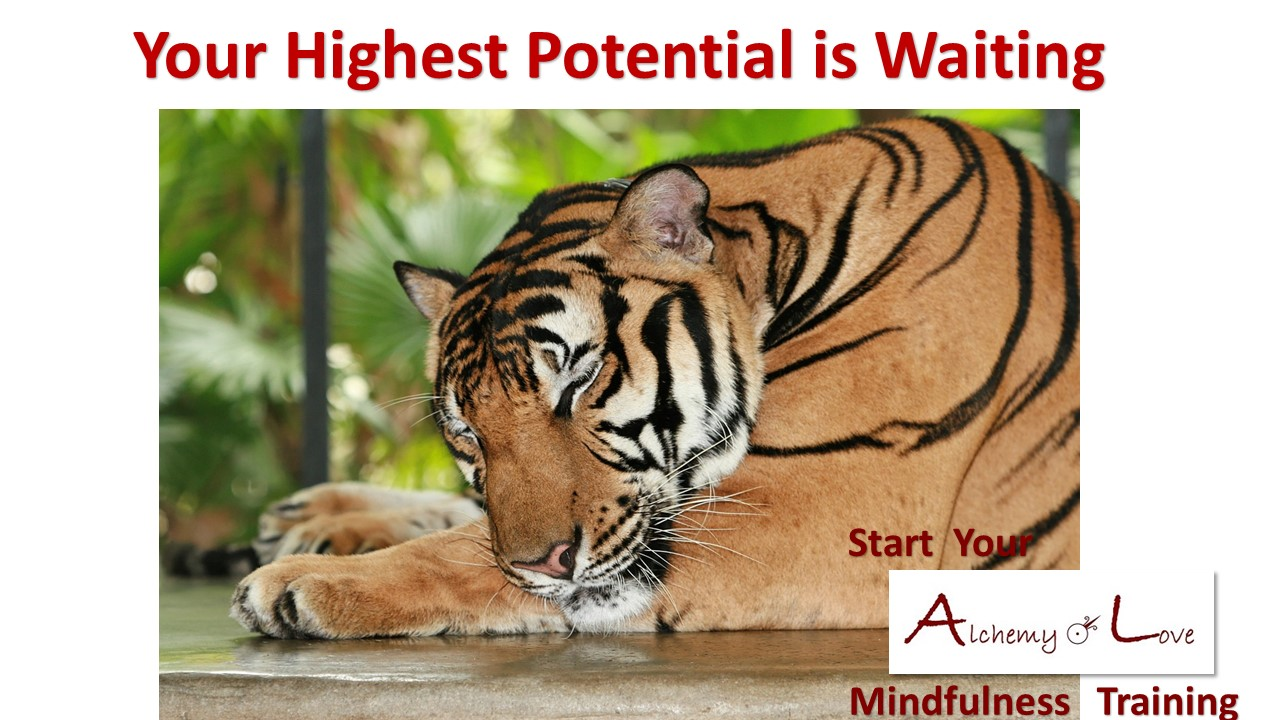 what is mindfulness: Highest potential is waiting Sleeping tiger