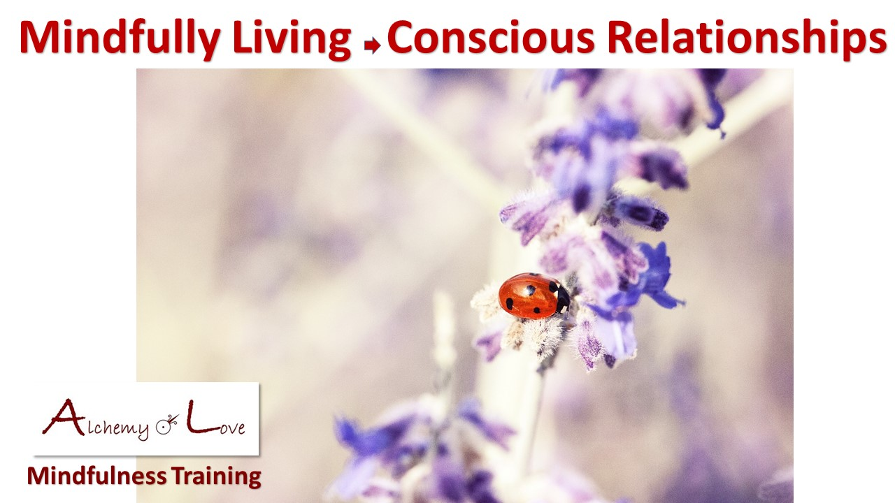mindfulness training books interview: conscious relationships