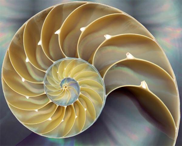 Spiritual Symbolism Of Spiral And Its Cosmic Rhythms
