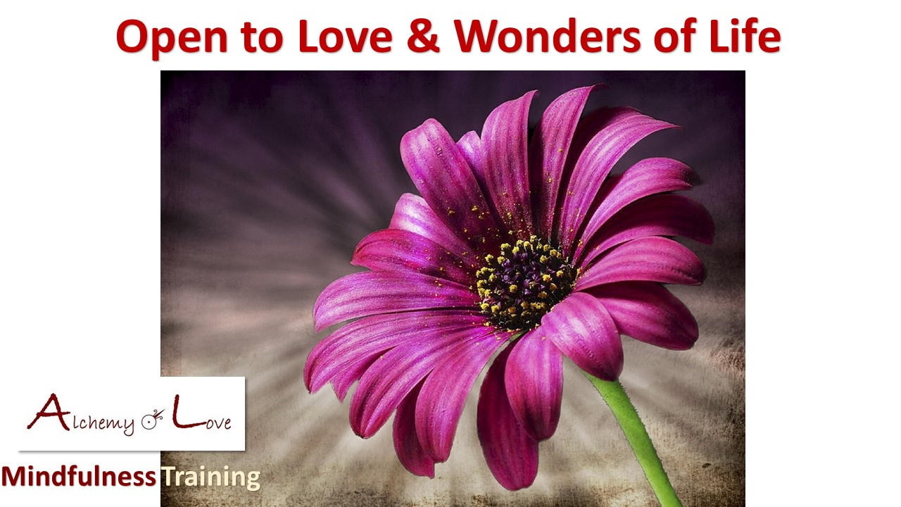 open to love and wonders of life alchemy of love mindfulness training by Nuit