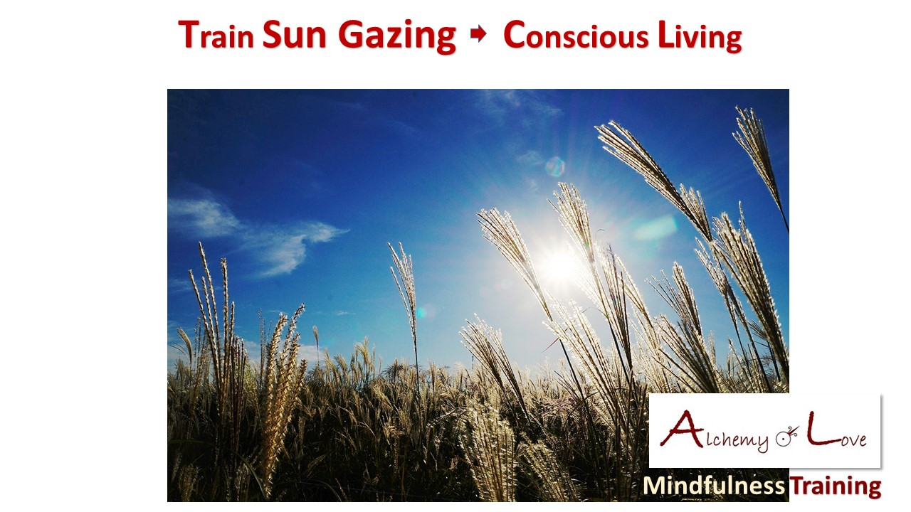 spiritual symbolism of light sun gazing sunset field